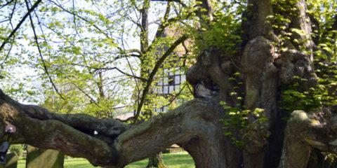Kirchlinde in Reelkirchen